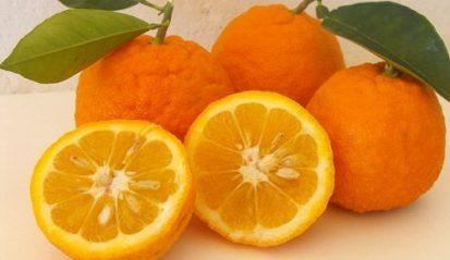 Naranja-Amarga